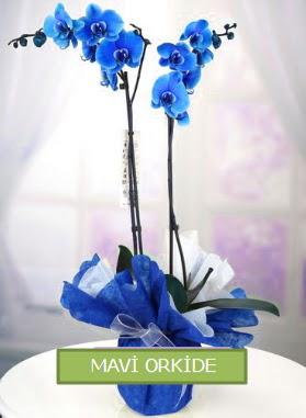 2 dallı mavi orkide  Ulus Ankara çiçek online çiçek siparişi