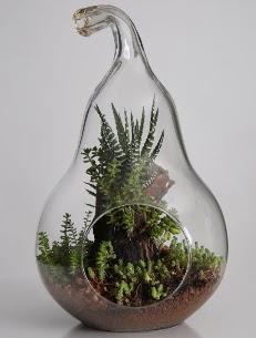 Armut cam küçük boy terrarium  Ulus Ankara çiçek gönderme