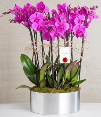 11 dallı mor orkide metal vazoda