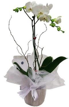 Tek dallı beyaz orkide  Ulus Ankara güvenli kaliteli hızlı çiçek