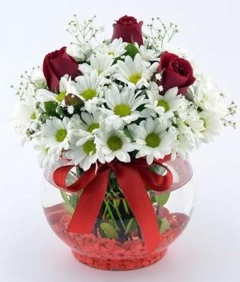 Fanusta 3 Gül ve Papatya  Ulus Ankara hediye sevgilime hediye çiçek