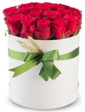 Özel kutuda 25 adet kırmızı gül çiçeği