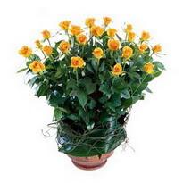Ulus Ankara yurtiçi ve yurtdışı çiçek siparişi  10 adet sari gül tanzim cam yada mika vazoda çiçek