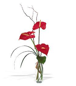 Ulus Ankara anneler günü çiçek yolla  cam yada mika Vazoda 3 adet  antoryum