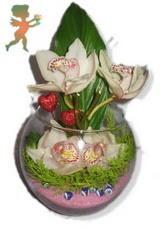 fanus içerisinde 4 orkide  Ulus Ankara hediye sevgilime hediye çiçek
