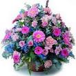 karisik mevsim kir çiçekleri