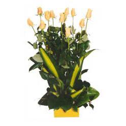 12 adet beyaz gül aranjmani  Ulus Ankara çiçek satışı
