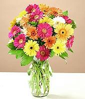Ulus Ankara çiçek yolla  17 adet karisik gerbera