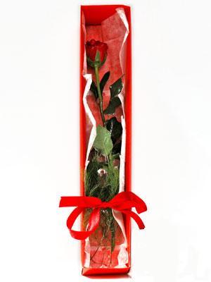 Ulus Ankara ucuz çiçek gönder  1 adet kutuda gül