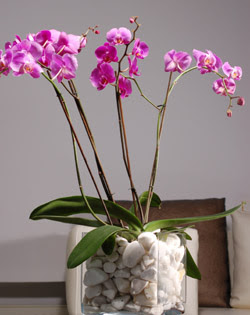 Ulus Ankara anneler günü çiçek yolla  2 dal orkide cam yada mika vazo içerisinde