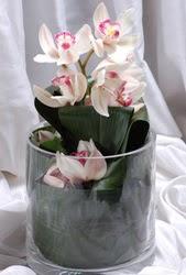 Ulus Ankara çiçek servisi , çiçekçi adresleri  Cam yada mika vazo içerisinde tek dal orkide