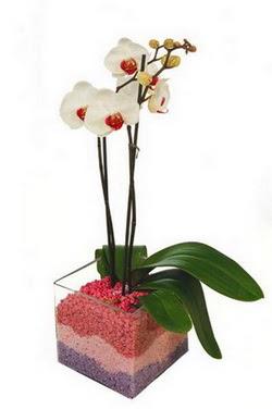 Ulus Ankara online çiçekçi , çiçek siparişi  tek dal cam yada mika vazo içerisinde orkide