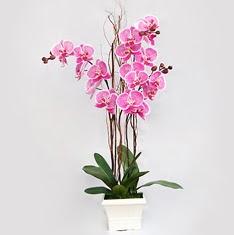 Ulus Ankara yurtiçi ve yurtdışı çiçek siparişi  2 adet orkide - 2 dal orkide