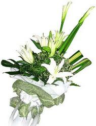 Ulus Ankara çiçek , çiçekçi , çiçekçilik  3 dal kazablanka çiçegi ve yesillikler