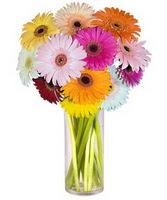 Ulus Ankara çiçek servisi , çiçekçi adresleri  Farkli renklerde 15 adet gerbera çiçegi