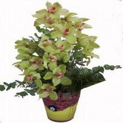 2 dal orkide  cam vazo içerisinde çiçek model