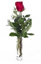Vazo içerisinde 1 adet kirmizi gül  Ulus Ankara yurtiçi ve yurtdışı çiçek siparişi