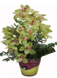 Ulus Ankara çiçek yolla , çiçek gönder , çiçekçi   cam vazo içerisinde 2 dal orkide çiçegi