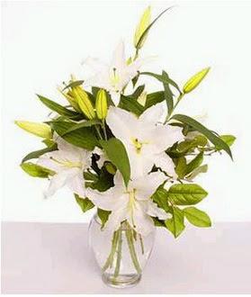 2 dal cazablanca vazo çiçeği