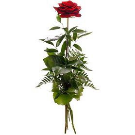 Ulus Ankara hediye çiçek yolla  1 adet kırmızı gülden buket