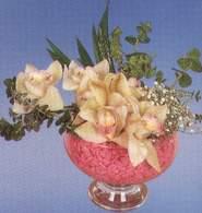 Ulus Ankara çiçekçi telefonları  Dal orkide kalite bir hediye