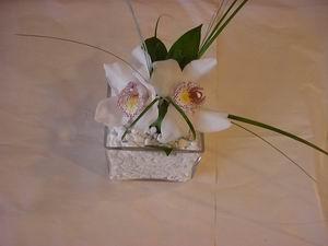 Ulus Ankara çiçek gönderme  Iki adet kaliteli bir orkide