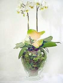 Cam yada mika vazoda özel orkideler