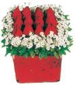 Kare cam yada mika içinde kirmizi güller - anneler günü seçimi özel çiçek