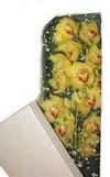 Kutu içerisine dal cymbidium orkide