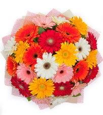 15 adet renkli gerbera buketi  Ulus Ankara ucuz çiçek gönder