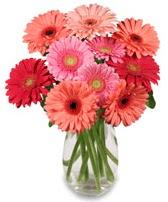 vazo içerisinde 13 adet gerbera çiçeği  Ulus Ankara anneler günü çiçek yolla