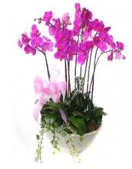 9 dal orkide saksı çiçeği  Ulus Ankara çiçek , çiçekçi , çiçekçilik