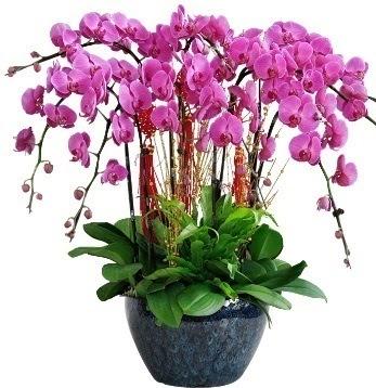 9 dallı mor orkide  Ulus Ankara çiçek yolla , çiçek gönder , çiçekçi