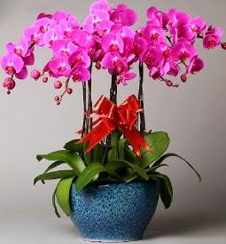 7 dallı mor orkide  Ulus Ankara çiçek yolla