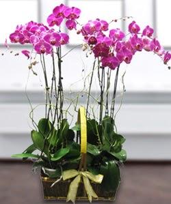 4 dallı mor orkide  Ulus Ankara çiçek , çiçekçi , çiçekçilik