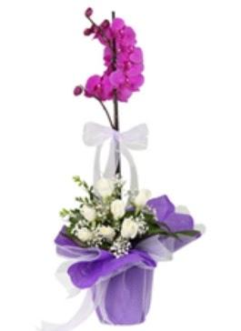 1 dal mor orkide ve 11 adet beyaz gül  Ulus Ankara çiçek yolla , çiçek gönder , çiçekçi