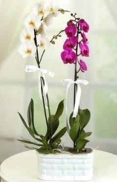 1 mor 1 dal beyaz İthal orkide sepet içerisinde  Ulus Ankara çiçekçi telefonları