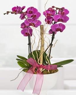 2 dallı nmor orkide  Ulus Ankara İnternetten çiçek siparişi