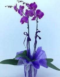 2 dallı mor orkide  Ulus Ankara çiçek satışı