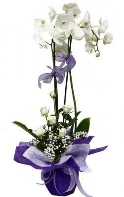2 dallı beyaz orkide 5 adet beyaz gül  Ulus Ankara 14 şubat sevgililer günü çiçek