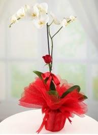 Tek dal beyaz orkide tek dal kırmızı gül  Ulus Ankara hediye sevgilime hediye çiçek