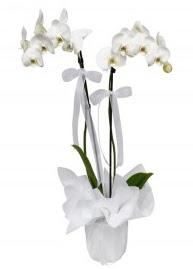 2 dallı beyaz orkide  Ulus Ankara çiçek , çiçekçi , çiçekçilik