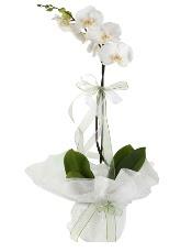 1 dal beyaz orkide çiçeği  Ulus Ankara çiçek mağazası , çiçekçi adresleri