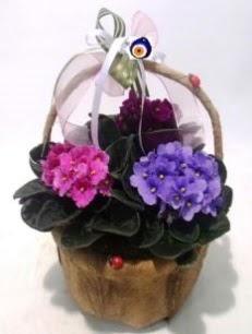 Sepet içerisinde 3 adet menekşe  Ulus Ankara İnternetten çiçek siparişi