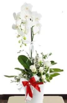 Tek dallı beyaz orkide 5 beyaz gül  Ulus Ankara anneler günü çiçek yolla