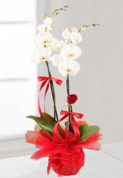 2 dallı beyaz orkide ve 1 adet kırmızı gül  Ulus Ankara İnternetten çiçek siparişi