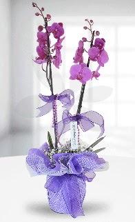Çift dallı mor orkide LİKE MARKADIR  Ulus Ankara İnternetten çiçek siparişi