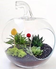 Elma Terrarium orta boy 5 kaktüs  Ulus Ankara hediye sevgilime hediye çiçek