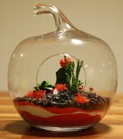 Elma Terrarium 3 kaktüs orta boy  Ulus Ankara çiçek yolla , çiçek gönder , çiçekçi