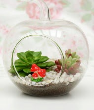 Küçük elma terrarium 3 kaktüs  Ulus Ankara kaliteli taze ve ucuz çiçekler
